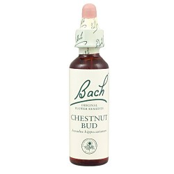 Bach 07 Chestnut Bud 20ml